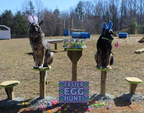 Annual Egg Hunt